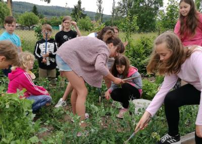 Výpěstky páťáků na školní zahradě
